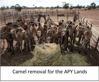 Camel removal