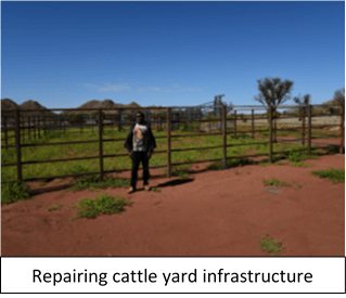 reparing cattle yard